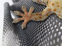 Picture of Geckskin, inspired by gecko feet