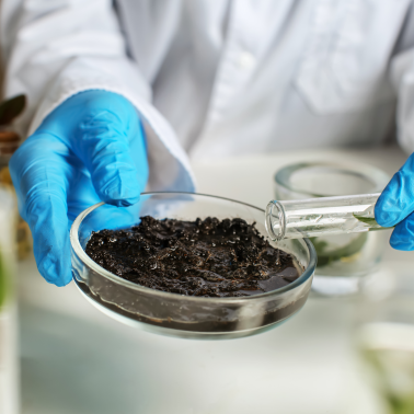 A scientist hold a soil sample in a petri dish