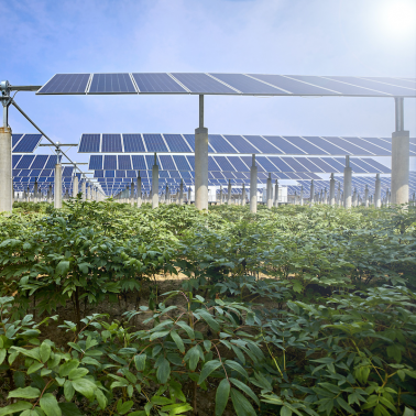 Understanding the impact of dual-use solar-agriculture installations in Massachusetts