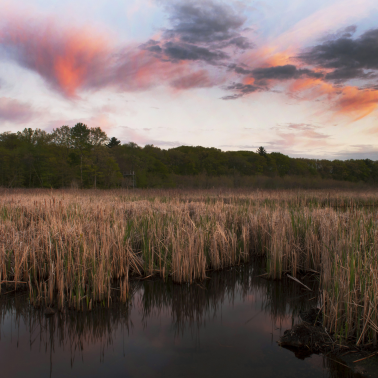 'Re-wilded'— Transforming Massachusetts cranberry bogs back into wetlands