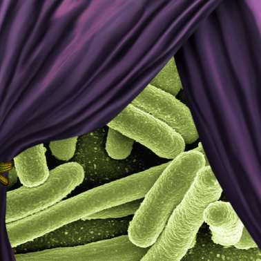 Unmasking bacteria that hide from the immune system