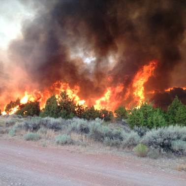 Preventing wildfires by controlling grasses