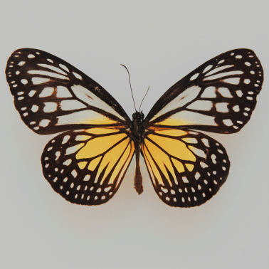 The 'new reality' locked inside of butterfly wings
