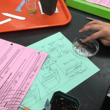 A students hand is shown with experiment papers, seeds, petri dish, and other plant experiment supplies