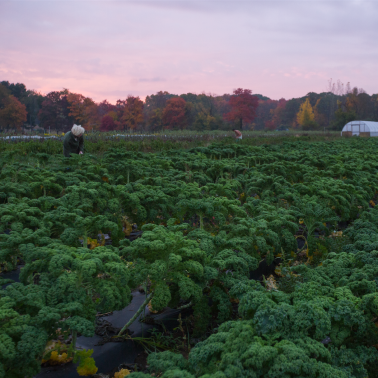 Adapting and adjusting — changes at the UMass student farms amidst the COVID-19 crisis