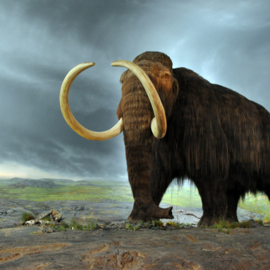 Painting of woolly mammoth