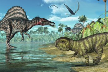 Now in 3D— dinosaur cloaca, the world's oldest all-purpose orifice