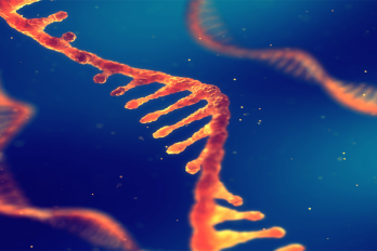 UMass Amherst Researchers Discover New, Cheaper Process to Make RNA