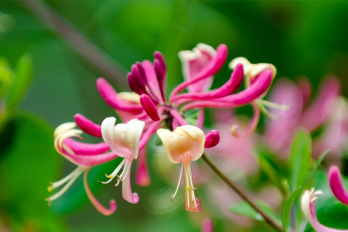 Research Shows Many Garden Ornamentals Are Invasive Plants