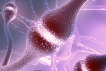 Release of Neurotransmitters in the Brain Is Impaired in Patients With Schizophrenia