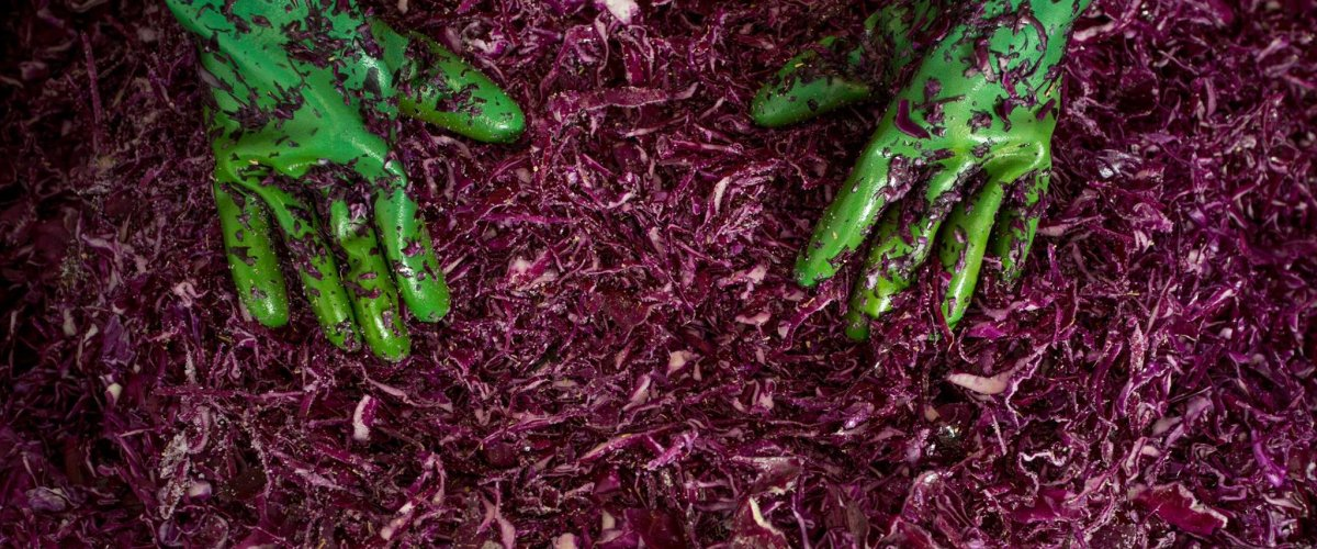 'Real Pickles' partners with food scientists to map microbe magic