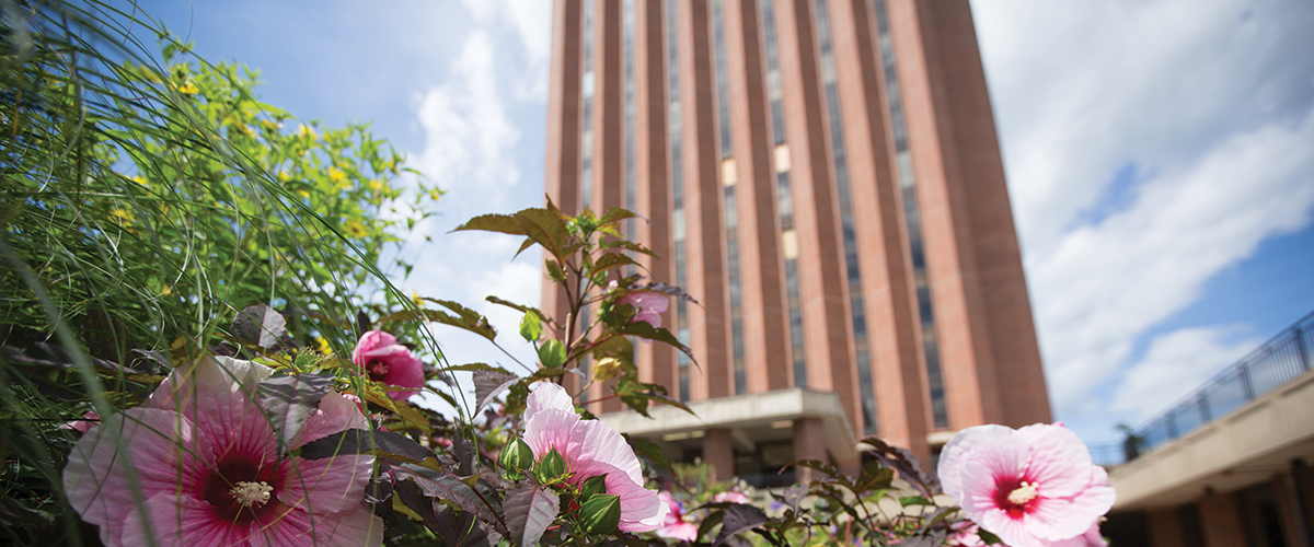 DuBois library is seen looming above blooming pink flowers on a summer day