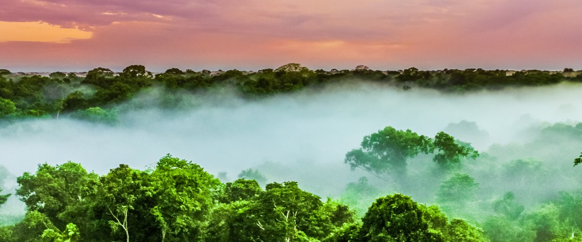 Amazon's rainforest seen from above