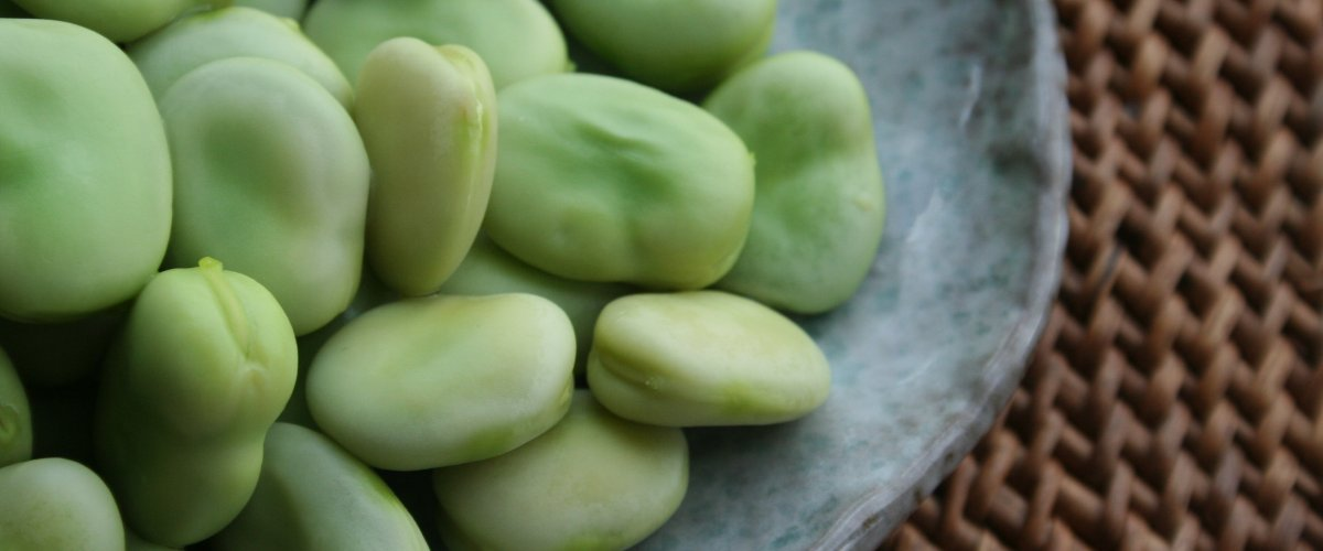 Faba beans may be a natural source for Parkinson's relief
