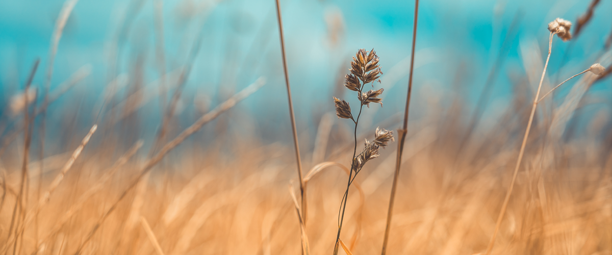Grass Microbiomes May Hold the Secret to Weathering Climate Change