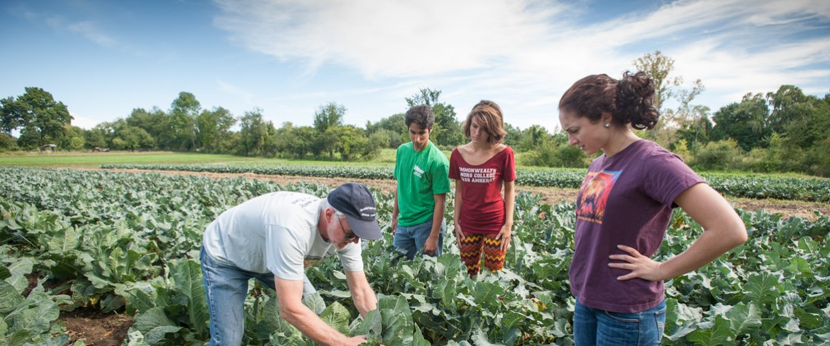 Students inspect kale in an agricultural class