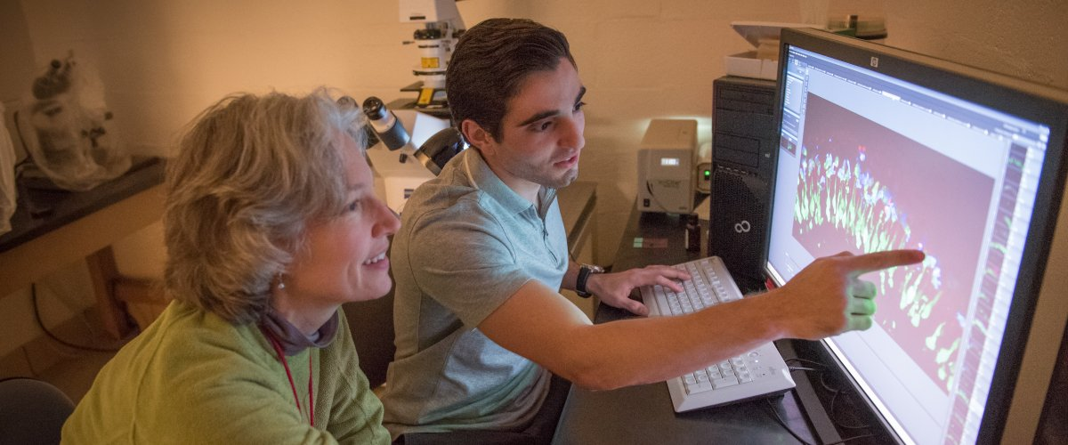 Frank Carellini, selected as one of a dozen Junior Fellows in Biology, worked in Abby Jensen's zebrafish lab.