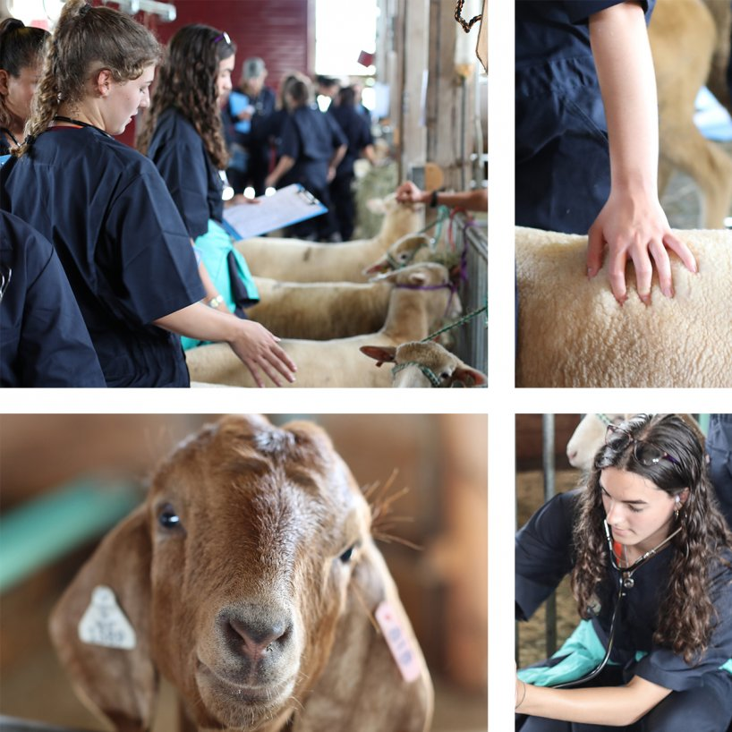 Pre-veterinary medicine program
