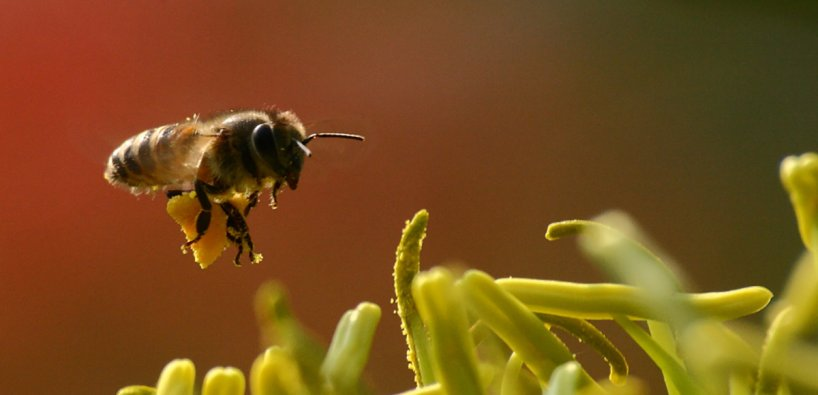 News: \'Lazy Lawn Mowers\' Boon for Bees | College of Natural Sciences ...