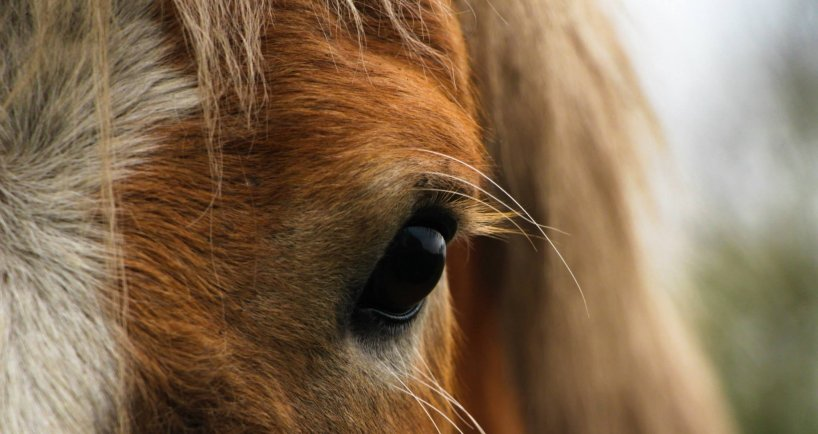 Science-based approaches improve horse training