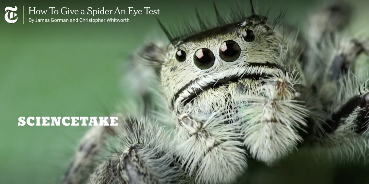 How to give a spider an eye test