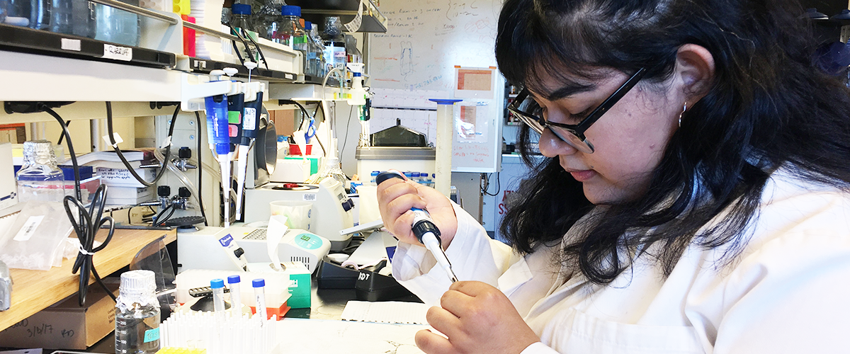 Iana Garcia works with cells in Kim Tremblays animal science lab