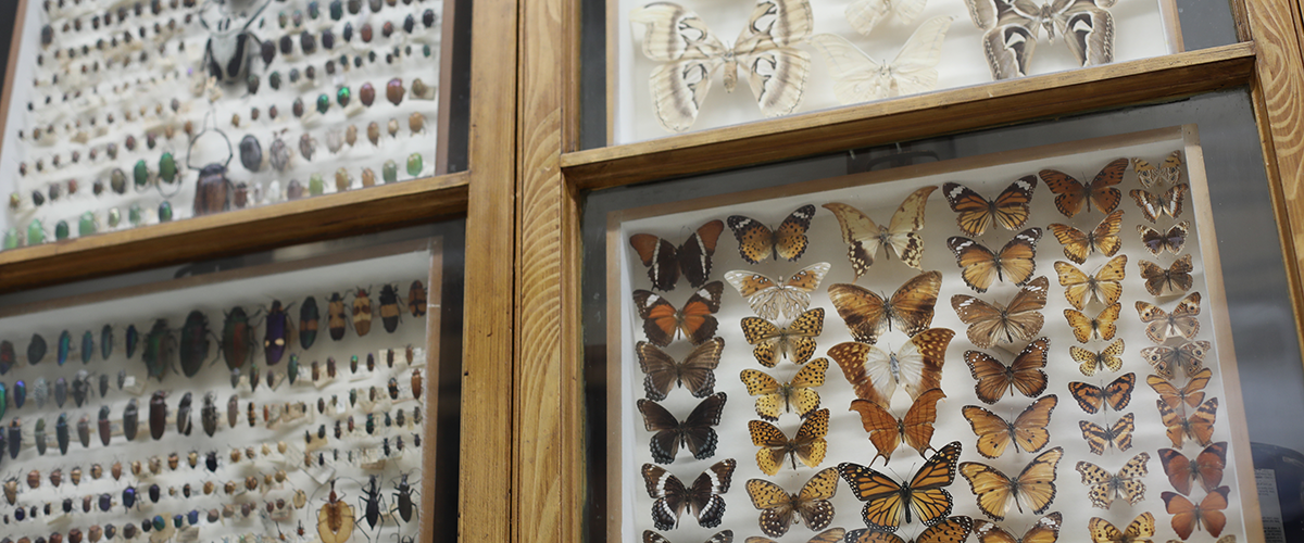 A view of the University of Massachusetts Entomology Collection